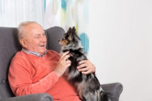 pet ownership in elderly care